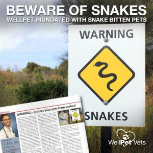 WARNING – protect your pets from snakes!