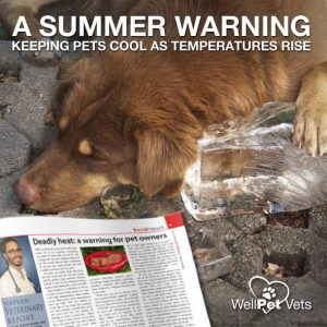 Heat Stroke & Your Pets