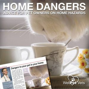 Dangers to your pet in your home
