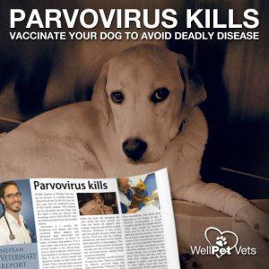 Parvovirus kills!