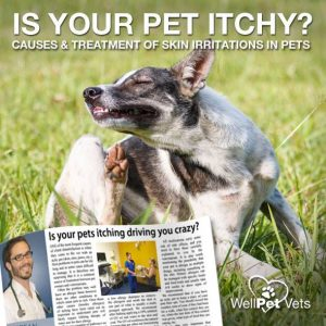 Is your pets itching driving you crazy?