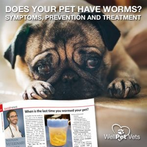 when was the last time you wormed your pet?