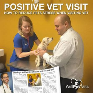 Creating a positive stress free vet visit for your pet