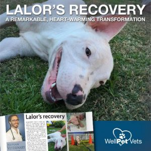 Lalor's Recovery