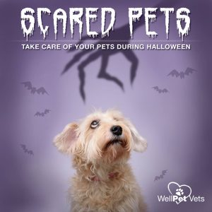 4 STEPS TO KEEP YOUR PET SAFE THIS HALLOWEEN