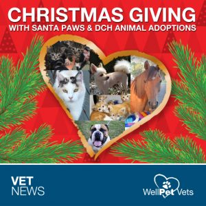 Santa Paws Helping Orphaned Pets This Christmas