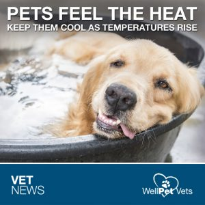 HOW TO HELP YOUR PET BEAT THE HEAT