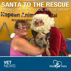Santa Paws, Raising Money for Friendly K9 Rescue!